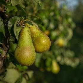 Fruitteelt